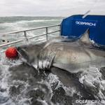 High-profile shark research group teams up with Jacksonville University