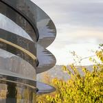 Report: People can't stop walking into glass at Apple's new headquarters