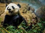 SNAPSHOT: Cooler; Big Gophers win; Snow update; One PowerBall winner; Texas wall roadblocks; Bao Bao back in China