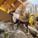 Sneak peek: Cabela's prepares for its first opening in D.C. area