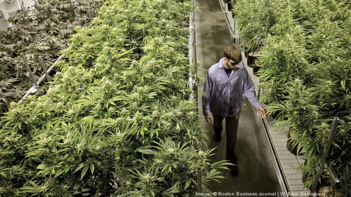 Big Brother will be watching Ohio's entire medical marijuana program