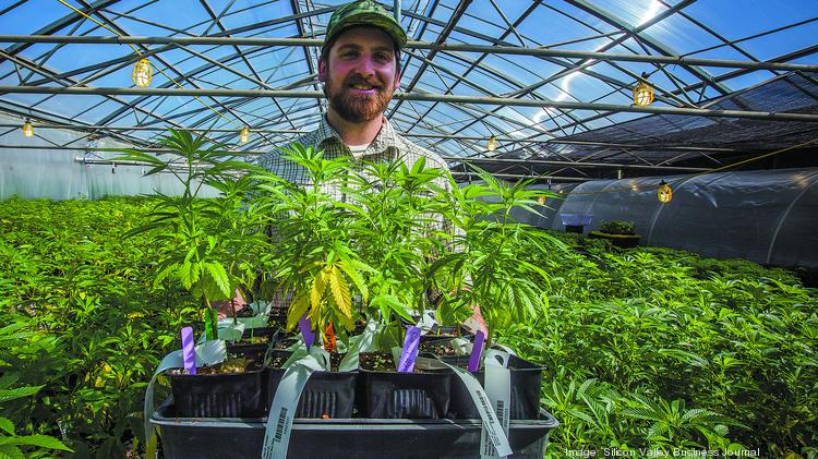Cannabis businesses Buddy's in San Jose and KindPeoples in