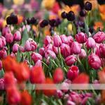 PHS Philadelphia Flower Show hosts first 'After Hours' event