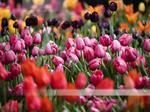 Flower Show to go on despite winter storm