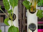 Aqualogue wants to put an aquaponics system in your apartment