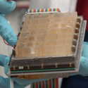 Researchers put the female reproductive system on a chip