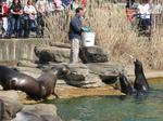 Saint Louis Zoo named best zoo in the country