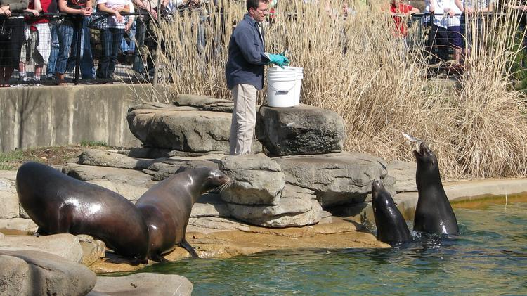 Saint Louis Zoo named best zoo in the country - St  Louis