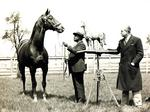 Derby Museum unveiling new exhibit for champion Thoroughbred (PHOTOS)