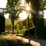 These are the top 5 biggest wineries in the Bay Area — and you might recognize the name Coppola