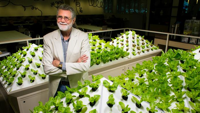 Microsoft cloud 'hack' grows 15,000 pounds of lettuce a year at Redmond HQ (Photos)