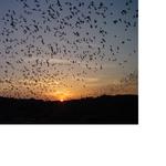 Duke Energy goes to bat for bats
