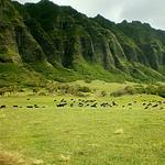 Hawaii's Kualoa Ranch among top four trending U.S. attractions