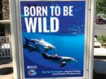 Animal advocacy groups place ads at Valley malls to deter people from visiting Dolphinaris