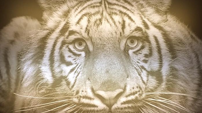 Dupont develops specialty Corian artwork for Buffalo Zoo fundraiser; eyes specialty market