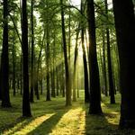 Trump tariffs on Canadian timber could impact North Carolina