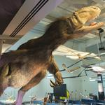 A sneak peek at the Frost Museum of Science (Photos)