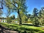 DBJ & 9News' 9Neighborhoods: Wash Park — Pretty, popular and pricey (Photos)