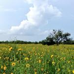Drilling Permit Roundup: KA Energy Partners emerges as new player in South Texas