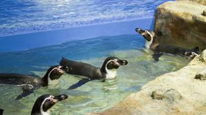 Photos: Moody Gardens new penguin exhibit to open May 27