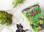 Bowery Farming receives VC boost from Google, others