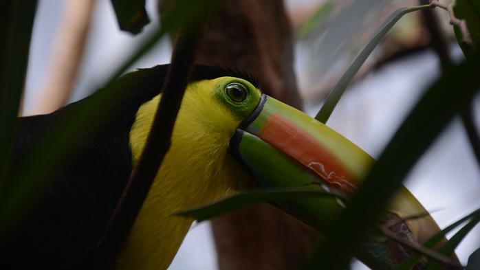 Aviary undergoing $1.25M tropical rainforest renovation
