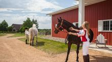 Exceptional Horse Farm and Artisan Crafted Home