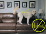 This startup is taking the shock out of training your dog