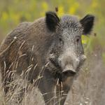 How to go hog wild with your marketing strategy
