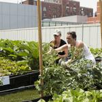 A ton of produce: Photos of BMC's brand new rooftop garden