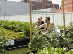 A ton of produce: Photos of BMC's brand new rooftop garden