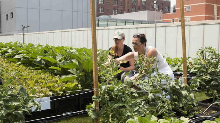 Rose Arruda, The Urban Agriculture Coordinator With The MA Department Of  Agricultural Resources (at