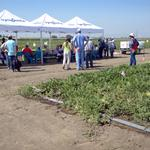 After considering sale, Syngenta remains committed to Woodland seed research center (PHOTOS)