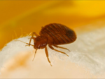 Thank goodness, we're not No. 1: Cincinnati trails only this city in bed bugs