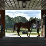 New York's thoroughbred industry is on the rise, on and off the track