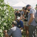 Willamette wineries group, Oregon Pinot Camp merge