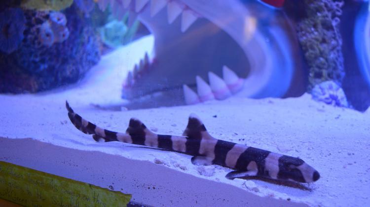 BMW Winston Salem >> Sharks upgrade the Shark Tank with sponsor and —wait for ...