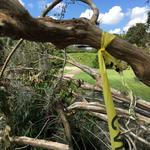 <strong>Leu</strong> Gardens closed indefinitely; storm damage poses 'serious threat' to people, property
