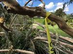 Leu Gardens closed indefinitely; storm damage poses 'serious threat'