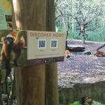 How napping lemurs could help this Nashville tech company spread its product