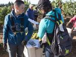 In Oregon vineyards, a harvest rush, a dash for cash