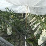 Jacksonville restaurateurs pool funds to support damaged kale farm