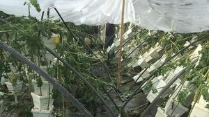 Jacksonville restaurateurs pool funds to support damaged kale farm
