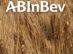 AB InBev partners with Illinois ag-tech startup to bring data to farmers