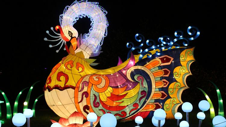 First look at popular china lights festival returning to - China lights boerner botanical gardens ...