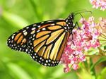 Butterfly Pavilion unveils plans for huge invertebrate lab and exhibition