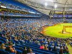 Which baseball team has the most loyal fans? Here's how the Tampa Bay Rays stack up