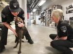 Meet the Boeing bomb dogs: A highly trained crew of rescued pups who protect VIPs and factories