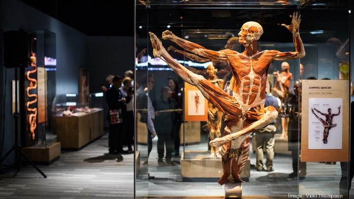 Photos: Body Worlds opens for unprecedented 10-year run at The Tech