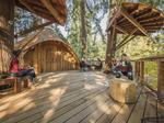 Photos: Microsoft mixes nature and work in this new treehouse office